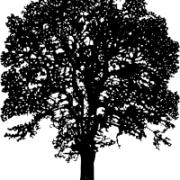 albo_albo_drzewo_200